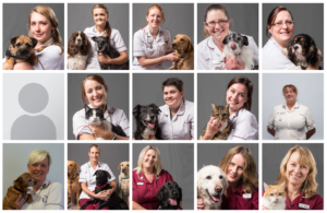 screen shot of vet website - staff portraits by freelance photographer John Kemp of JK Photography