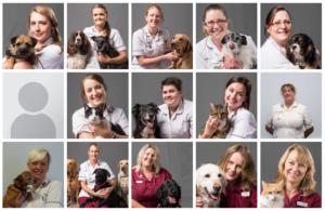 screen shot of vet website - staff portraits by freelance photographer John Kemp of JK Photography