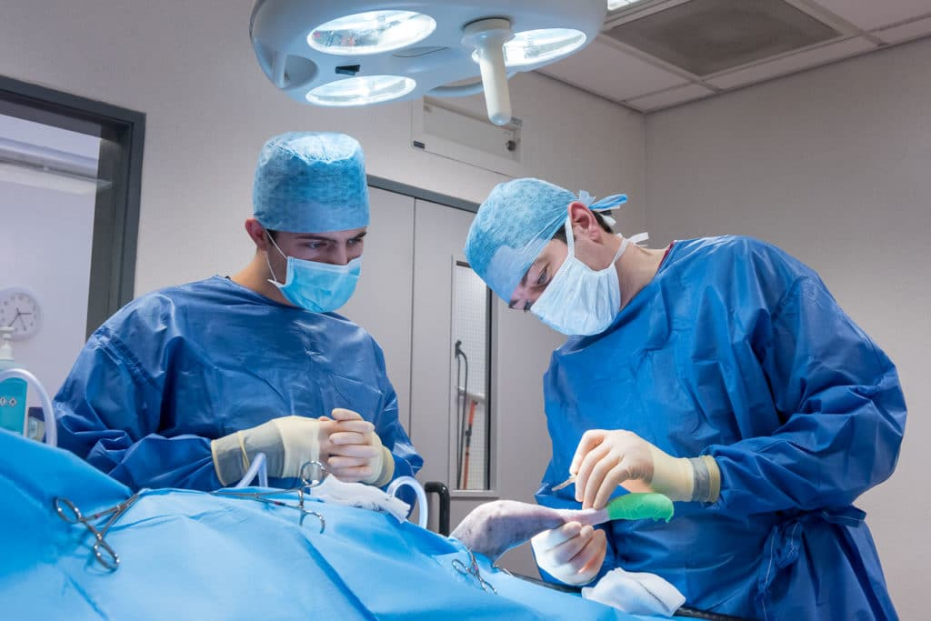 Two vets in operating theatre carrying out surgery on a cat, by freelance photographer John Kemp of JK Photography