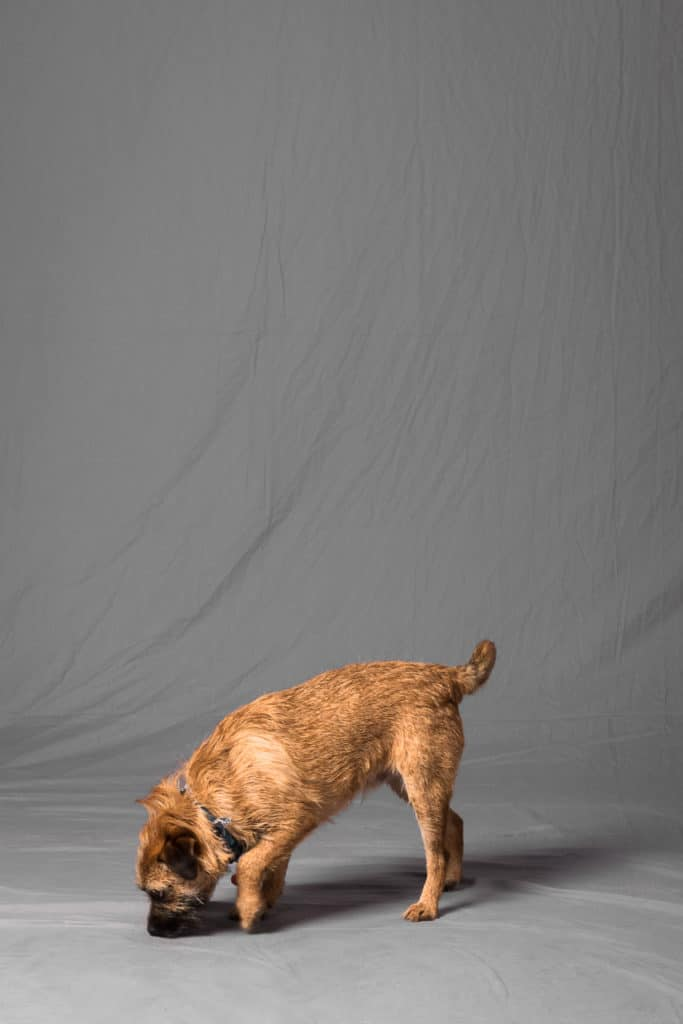 Dog on a plain background by freelance photographer John Kemp of JK Photography