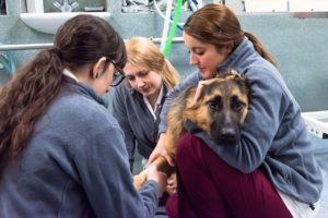 Three veterinary nurses treating a dog, by freelance photographer John Kemp of JK Photography