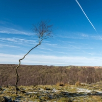 Solitary tree on Gardom's Edge