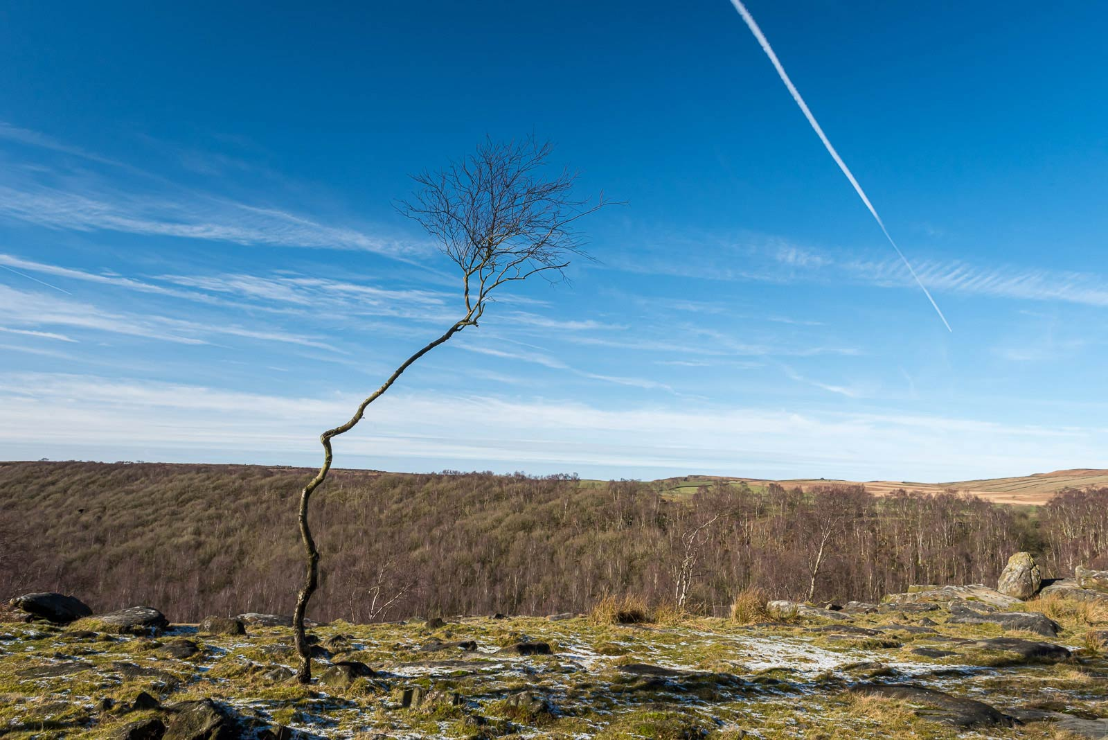 Solitary tree on Gardom's Edge
