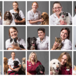 screen shot of vet website - staff portraits